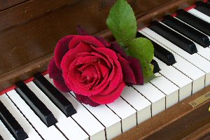 7.  A Red rose on piano Centered